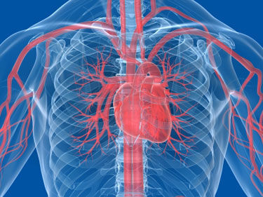 Poor heart health linked to learning, memory problems