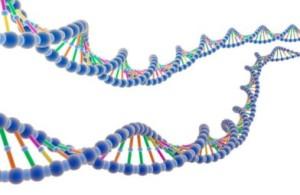 Protein DNA_1209171019F2975B