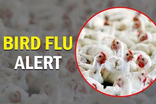 bird flu alert