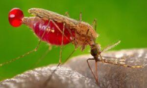 Resolution on Malaria