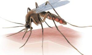 case of Zika Virus